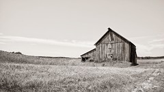 Scenic Iowa (Oliver Leveritt) Tags: rural barn iowa nikond610 afsnikkor1635mmf4gedvr oliverleverittphotography wideangle blackandwhite monochrome sepia platinum