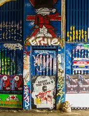 beefeater shoots the banks (PDKImages) Tags: street city windows girls urban streetart london art girl beauty graffiti women scenery rooftops faces skin camden stripes murals caged shoreditch walls contrasts owls