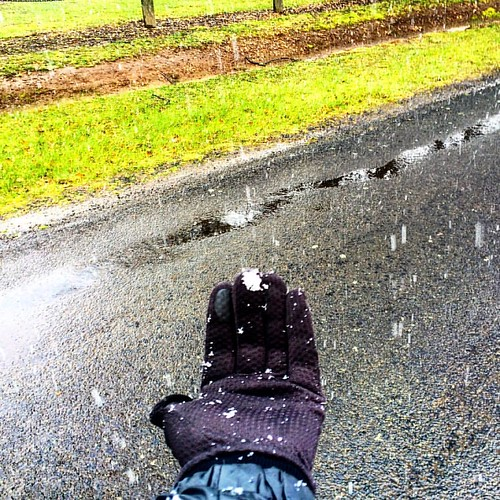 Snow on my gloved hand in Westbury today! Just a shame it didn't settle 😀 #michfrost #westbury #snowday