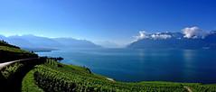 Splendeurs de Lavaux (Diegojack) Tags: nikon nikonpassion d7200 paysages lac panorama lavaux lman corniche chexbres rivaz vignes vignobles