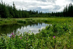 Majestic Meadows (jdub003) Tags: landscape pond flowers trees alaska denali reflection green grass serene