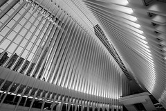 WTC Transit Hub, NYC DSC02696-Edit (nianci pan) Tags: abstract transithub santiagocatlatrava nyc newyorkcity manhattan trainstation curve line pattern geometry geometric city cityscape landscape urban nianci pan sony sonyalpha dslr sonyphotographing
