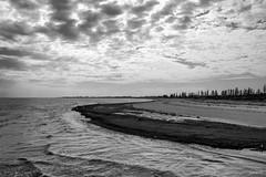 Seaside (Jackassp) Tags: adelaide grey pentaxk1 pentaxlife sea seagrass seagulls sigma2470mmf28ifexdghsm singleinaugust2016 winterinadelaide