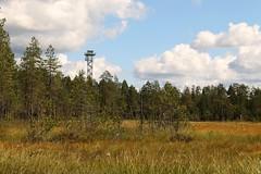 Watching The Border (Derbyshire Harrier) Tags: watchtower border finland summer borealforest 2016 tiagaforest finlandrussianboarder borderzone forest blanketbog silverbirch martinselkosenerkeskus martinselkosenerkeskuswildlifecentre kainuu