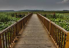 Lake Efteni (syhnbykync) Tags: nature natural dzce efteni gl lake swamp sitalan eftenigl bataklk