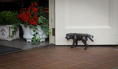 IMG_3896 (kz1000ps) Tags: tour2016 california monterey carmelbythesea dog statue sculpture bronze peeing pissing urinating america unitedstates usa scenery landscape