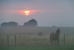 Misty 'Sunrise (Infomastern) Tags: sdersltt cloud countryside dimma fog horse hst landsbygd landscape landskap mist sky sol soluppgng sun sunrise