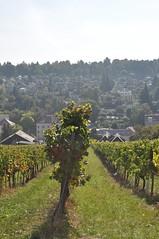 sDSC_0064 (L.Karnas) Tags: wien vienna wiede    viena vienne autumn austria sterreich herbst 2016 weinwandertag wein wander tag wanderung wine wandering neustift am walde