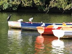 Cormorant and Colours. Highfields Park. Sept 2016 (SimonHX100v) Tags: phalacrocoracidae cormorant rowing rowingboat rowingboats reflection reflections boat boating boats highfieldspark nottingham nottinghamshire water lake sonyhx100v simonhx100v england uk bird birds