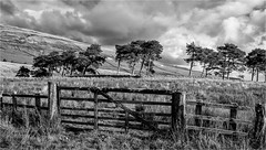 Harwood . (wayman2011) Tags: canon50d lightroom wayman2011 bwlandscapes mono trees gates pennines dales teesdale upperteesdale harwood countydurham uk