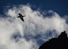 _EM15054 (fernando_garca) Tags: fernandogarcia stroglofilms anaga paisajes tenerife canarias mar naturaleza playas gaviotas pajaros fauna