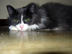 2006- Pandora 02 (teresamarkos) Tags: pandora cat cats kitten kittens felines feline