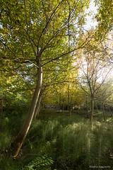 Bosco (ambrasimonetti) Tags: wood bosco autumn ascolipiceno autunno 2016 saveearth