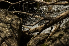 A strange photo (Miksi992) Tags: rock tree water canon d600 outdoor landscape