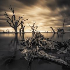 Roots (David Dahlenburg) Tags: southaustralia sa lake bonny lakebonny dahlenburg trees deadtree deadtrees wwwdaviddahlenburgcom australia landscape longexposure
