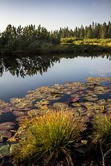 Pri Lovrenkih (GregaKapun) Tags: pohorje slovenia slovenija jezera sigma1750mmf28exdcos canoneos60d lovrenkajezera rogla tajerska hiking lake forest