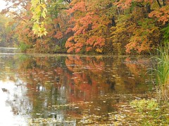 2016-10-21_DSCN5945 (becklectic) Tags: 2016 connecticutriver fallcolors reflection vermont
