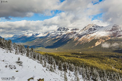 Among Giants- October 24, 2016 (zachary.locks) Tags: ab alberta among blue bow bright canada capped cy365 endless first fresh giants grand high lake mountains peyto pine rockies sky snow summit sun sunny tiny top trees up white world zlocks