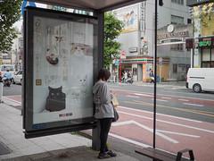 bus stop of cats (kasa51) Tags: busstop people sign newspaperserialnovel iamacat natsumesoseki street yokohama japan