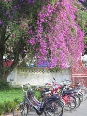 """Luang Prabang <a style=""""margin-left:10px; font-size:0.8em;"""" href=""""http://www.flickr.com/photos/83080376@N03/15279514393/"""" target=""""_blank"""">@flickr</a>"""