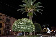 (My-Secret-Love) Tags: plaza arbol navidad luces noche palmera diciembre 2014 ampana