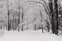 Down My Driveway - November 25, 2014 (Robert F. Carter) Tags: driveways snow fall michigan petoskey autumn robertcarterphotographycom ©robertcarter