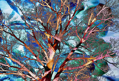 """Psychedelic Trees in Caistor Centre are Prettier than Most.... • <a style=""""font-size:0.8em;"""" href=""""https://www.flickr.com/photos/46046586@N04/15702558249/"""" target=""""_blank"""">View on Flickr</a>"""