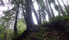 Limekiln Redwoods (Jeff Goddard 32) Tags: california bigsur redwood montereycounty hwy1 coastredwood limekilnstatepark