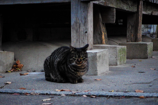 Today's Cat@2014-12-17
