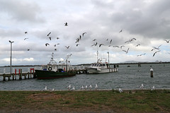 20150223_016_port_welshpool_fisherman_boats_and_seagulls_1920_1280 (lindy_scuba) Tags: birds port boat seagull australia victoria fishermanboat welshpool hazelpark