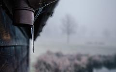 escape (Morgan Tedd) Tags: morning england blackandwhite mist nature fog canon warwickshire stratforduponavon vsco vscofilm