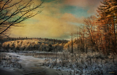 .. the winter swamplands .. (xandram) Tags: snow ice photoshop manipulation nh cattails swamp oilpaint texturesmyown