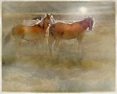 Companions (mistissimo) Tags: horses misty digital photoshop manipulated painting landscape photo with scene watercolour chestnut ponies effect atmospheric manipulatedphoto photoshoplandscape horsesponies mistyscene atmosphericpainting landscapewithhorses digitalwatercoloureffect chestnutponies watercolourhorsesponies