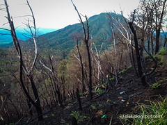 Ijen Crater pohon terbakar1-054914rw (Luciana Adriyanto) Tags: travel indonesia landscape eastjava ijencrater kawahijen banyuwangi bondowoso v1olet lucianaadriyanto