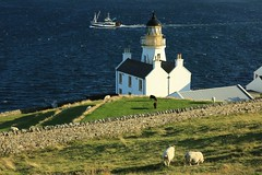Coastal Farm and Lighthouse Scrabster Caithness Scotland - EXPLORED (eriagn) Tags: travel autumn sea panorama lighthouse field drywall ferry clouds coast scotland orkney europe wake sheep unitedkingdom flag explore foam fishingboat scrabster rockwall caithness thurso fishingtrawler explored northeastscotland overtheexcellence eriagn ngairelawson ngairehart