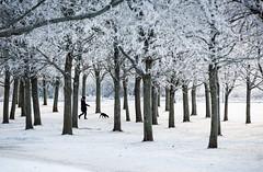 Uppsala, December 29, 2014 (Ulf Bodin) Tags: winter dog snow tree walking vinter sweden uppsala sverige rime snö träd rimfrost uppsalalän salabacke salabackar