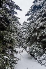 Art Loeb Trail (plottsdaniel) Tags: winter snow nikon blueridgeparkway wnc pisgahnationalforest artloebtrail blackbalsamknob nikond7100