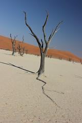 Arido (Maria Velon) Tags: africa desert dune duna namibia deserto namib arido deadvlei radice naukluft aridit namibnaukluft desertodelnamib