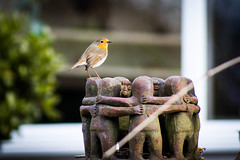 Robin 2015_02_21 (danielg.blount.photography (please don't follow me) Tags: england bird nature robin canon garden unitedkingdom wildlife nottinghamshire blip 550d blipfoto eos550d