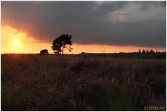 Zonsondergang op Strabrecht (7D013967) (Hetwie) Tags: sunset sun zonsondergang heather nederland zon heide noordbrabant strabrechtseheide heezeleendegeldrop