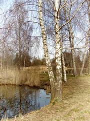 Anglų lietuvių žodynas. Žodis ried reiškia <li>ried</li> lietuviškai.