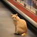 Supermarket Guard Cat