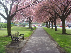 Pink Preston (Tony Worrall) Tags: county uk pink trees england urban nature bench cherry spring nice stream colours tour open place natural northwest pavement walk country north visit location row lancashire area preston northern update attraction lancs welovethenorth 2015tonyworrall