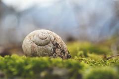 affittasi monolocale (C-Smooth) Tags: macro nature dof lumaca casetta guscio monolocale csmooth stefanocabello