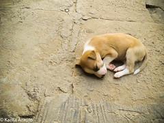 (floydianalost) Tags: brazil dog pet pets color art dogs colors brasil loving artwork flickr all foto amor like free follow adventure myjob likes amador aventura followme coment lovedog lovephoto followyouback
