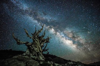 Sony A7RII Astro Photography Milkyway Ancient Bristlecone Pine Forest Dr. Elliot McGucken Fine Art Landscape Photography!  Subtle Light Painting!