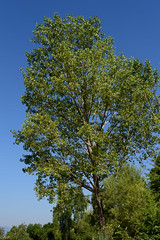 tree in the sky (photographISO) Tags: nikon ioannina epirus