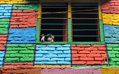 Window story!! (ashik mahmud 1847) Tags: color kids pattern nikkor bangladesh d5100