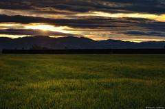 Evening Fields of Green (Kevin_Jeffries) Tags: lighting light texture nature hill meadow kevinjeffries