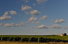 entre deux-mers , Gironde (jean-marc losey) Tags: france aquitaine gironde entredeuxmers ruch vigne nuage villa d700